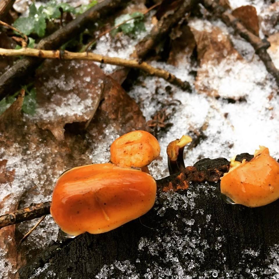 вырасли или выросли грибы