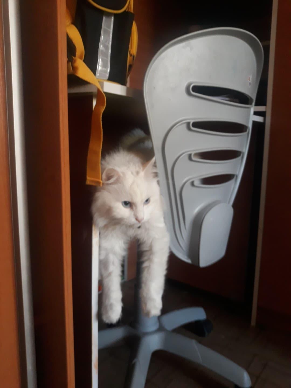 В новой семье котик поправился на целый килограмм