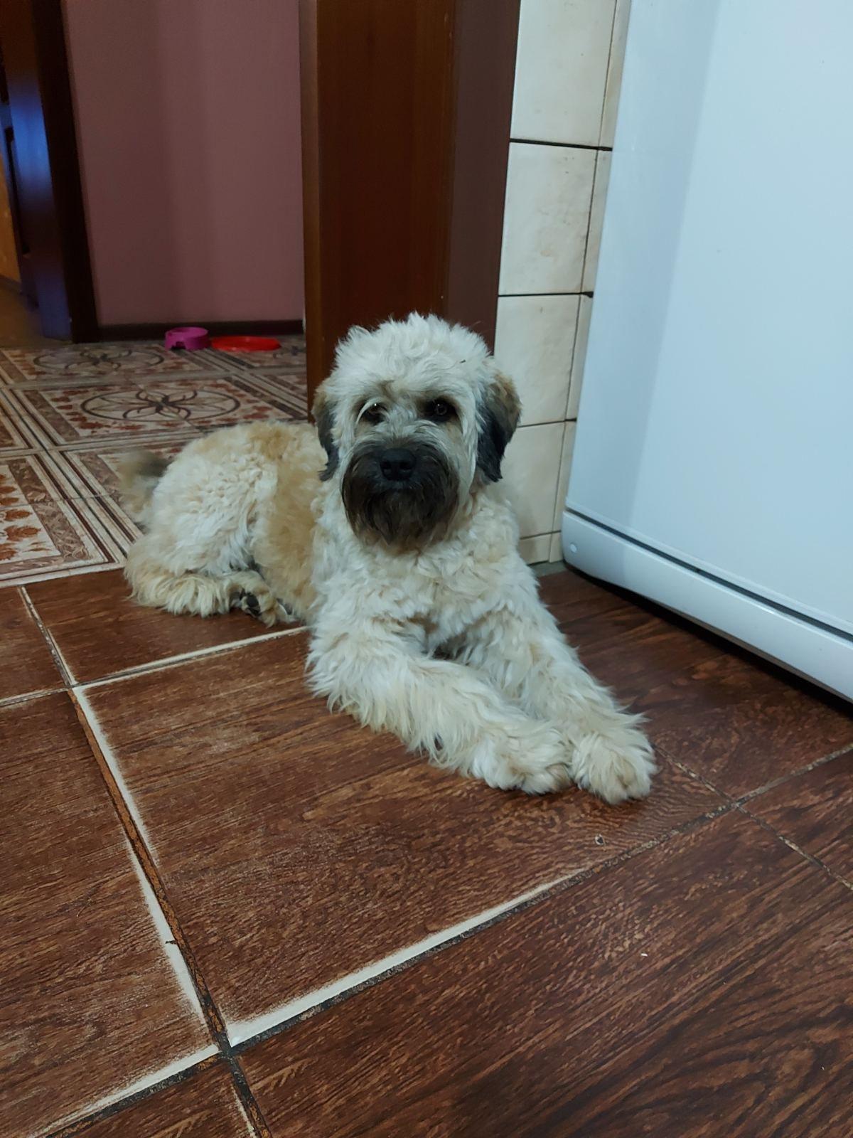 Пропала собака в Днепре / фото: База потерянных и найденных домашних животных ДНЕПР