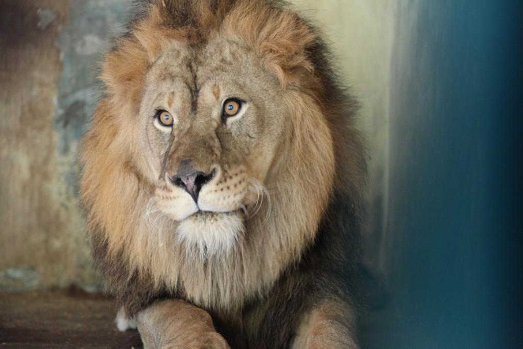 Житель зоопарка в Хащевом / фото: hashevoe.com.ua