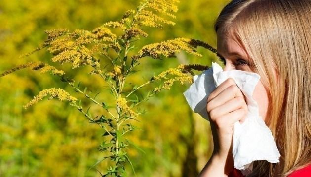 Аллергия на амброзию/ фото: ukrinform.ua