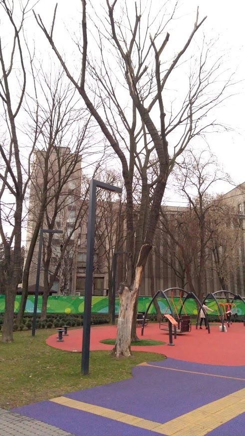 Сухие деревья - фото: fb Mykhailo Dubas